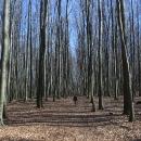 Šárka ztracená v bukovém lese