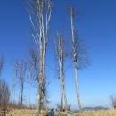 V Malých Karpatech rostou úžasné stromy.