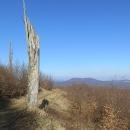 Výhledů si v Malých Karpatech neužijete, jsou to hory spíš pro milovníky lesů a stromů