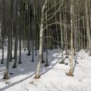 Vypadá to jako předjarní les, ale je teprve druhá půlka února
