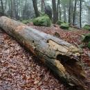 Kus dřeva
