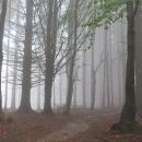 Ponurý podzimní les