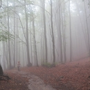 Šárka v ponurém lese
