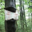 Strom sežral ceduli (foceno hlavně kvůli Pavlovi, ten má tyto fotky/fórky rád :-)