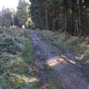 V lese opět bahýnko