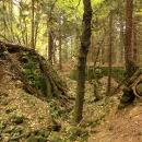 Nad Wojtowicemi ukrytá v lese zřícenina Fort Wilhelma