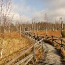 Chodníčky v rašeliništi