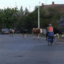 Dnes se už bohužel i na Ukrajině takový vesnický obrázek stává vzácnější