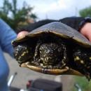 Setkání se želvou