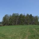 Tvrz Kašovice je ukryta v lesíku uprostřed pole