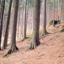 ŘOPíky ve strmém svahu v údolí Divoké Orlice