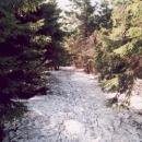 Tento sníh v lese neroztaje snad ani v červenci