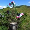 Strom ponožkovník, aneb u vaření oběda sušíme zpocené fusekle :-)