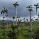 Bývalé kubánské plantáže