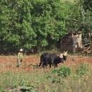 Jedna z podob kubánského zemědělství