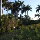 Nocleh pod palmami