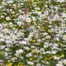 Kouzelné jaro