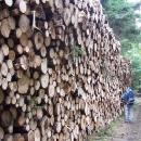 V lese hromádka dřeva - mít to před chalupou, tak nemusíme do konce života nic dělat :-)