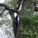 Hledání keší znamená i lézt na stromy