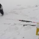 Pavlovy fungl nové běžky odhozené do sněhu