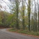 Bukový les cestou na Kékes