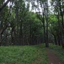 Tajuplný bukový les na hřebeni Malých Karpat, jen ožít.