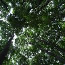 Stačí se podívat vzhůru a na les je hnedka jiný pohled