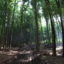 Bukovými lesy Malých Karpat