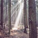 Podzimní les a sluneční paprsky