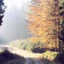 Podzimní nálada. Takhle to vypadalo i ve skutečnosti !