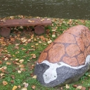 Želva na břehu