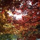 Paleta podzimních barev