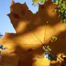 Detail podzimu