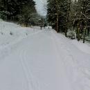 Šárčina stopa... jen moje delší lyže ji nejsou schopné tak vykroutit :-)