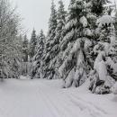 Na včera vyrolbovanou stopu napadla čerstvá vrstva sněhu