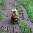 Na zámku tu mají medvědy