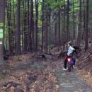 Vykřičníky na stromě upozorňují na krutý sjezd na cyklostezce.