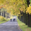Podzimní alej cestou do Gór Stolowych