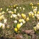A už tu máme jaro
