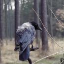 Až při bližším pohledu jsme zjistili proč ten pták neuletěl