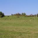 Krávy se pasou na loukách jako někde na safari