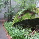 Vjíždíme do hlubokých lesů kolem pralesu Hojná Voda