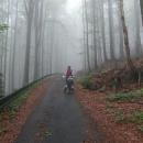 Hlubokým lesům pohraničí dává mlha tajemný nádech