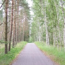 Opět německá dokonalost - břízy napravo, borovice nalevo