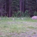 Lesní Ruský hřbitov - kdysi tady stával koncentrák. Luděk by tu nocoval, mně se nějak nechce. Nevím proč.