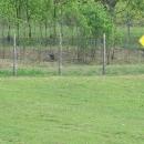 I ti klokani tady jsou (zaostřeno speciálně pro Terezu :-)