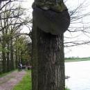 Strom, který snědl dopravní značku.