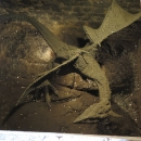 Hradní drak