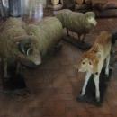 Expozice anomálií přírody, vícehlavá čí vícenohá zvířata