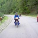 Děti u silnice dohlížejí na pasoucí krávy